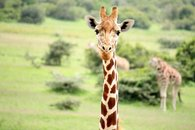 Safari Package Kenya almost all inclusive