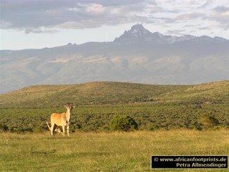 Mt. Kenya: von Sandai aus gesehen