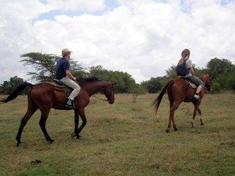 Pferdesafari: Der Pferdestall