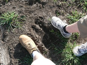 Aberdare-Country-Club: Footprint of a Giraffe