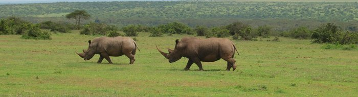 Safari Solio Ranch: White Rhino