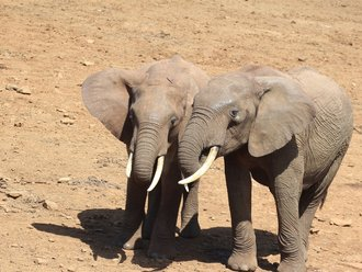 Aberdares Safari: Forrest Elephants