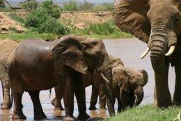 Samburu: Elephants in Samburu