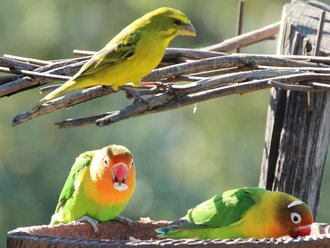 Bird Watching: Love Birds