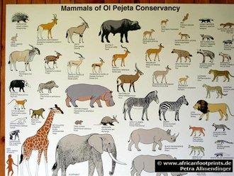 Sweetwaters: Mammals Ol' Pejeta