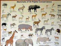 Mammals of Ol Pejeta Conservacy