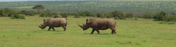 Safari Solio Ranch: Breitmaul Nashorn